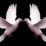Doves for Releasing